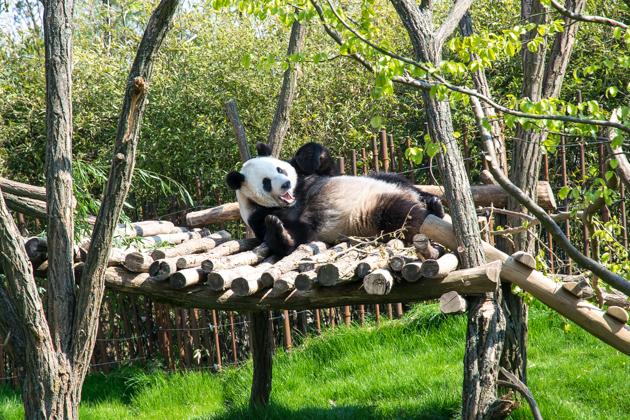 Pairi Daiza leukste dierentuin van Nederland en België