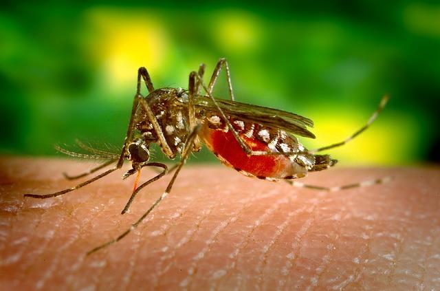 Chikungunya virus op Curaçao