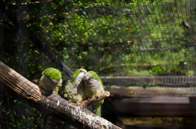 Zoo van Lille