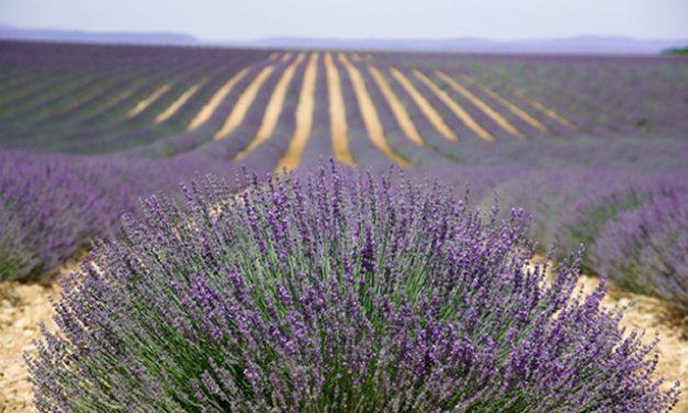 3 tips voor een onvergetelijke vakantie in Frankrijk