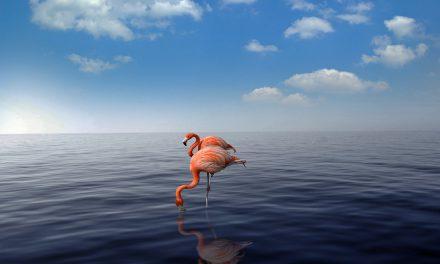 Vakanties Aruba en Curaçao vanaf 15 mei toegestaan